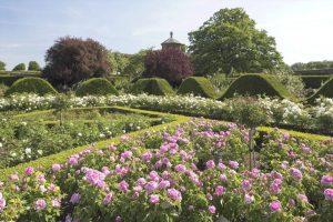 Houghton Hall, Walled Garden Rollercoaster Hedges and roses, Norfolk